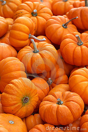 Free Pumpkins Stock Images - 256324