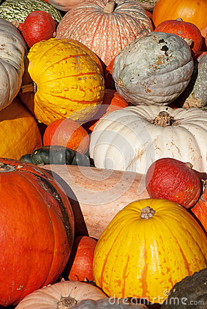 Free Pumpkins Stock Images - 26691214