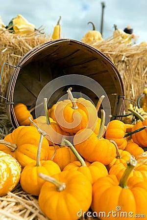 Free Pumpkins Royalty Free Stock Photo - 34057835