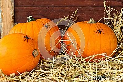 Pumpkins In The Barn