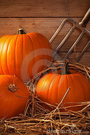 Pumpkins In The Barn