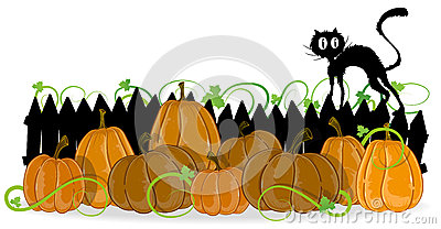 Pumpkins and black cat