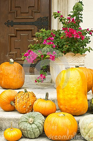 Pumpkins and bougainvilla:  Halloween in the South