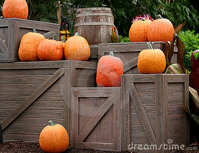 Pumpkins on Boxes