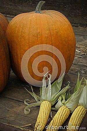 Pumpkins & corn