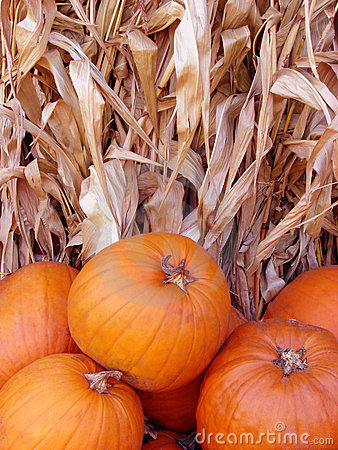 Pumpkins and corn stalk