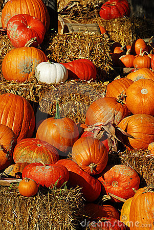 Free Pumpkins Display Royalty Free Stock Images - 3434699