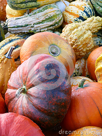Pumpkins and Gourd Harvest III