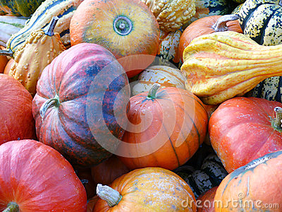Pumpkins and Gourd Harvest IV