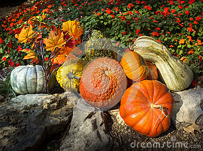 Pumpkins, Gourds, Autumn Leaves, and Late Blooming Flowers Say Thanksgiving In This Composition
