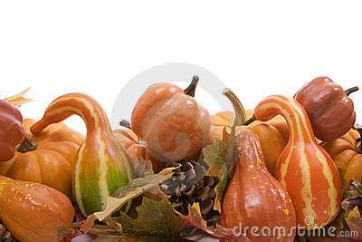 Pumpkins and gourds with fall