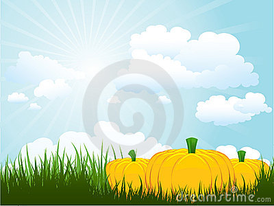 Pumpkins in grass