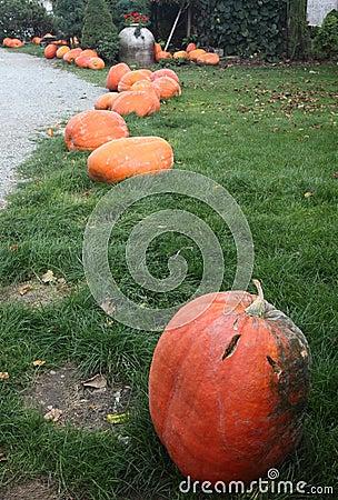 Pumpkins for Halloween decorations