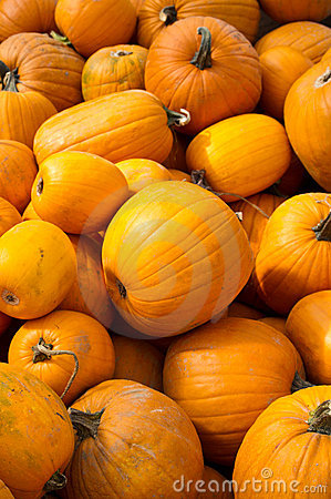 Pumpkins for Halloween ready for sale