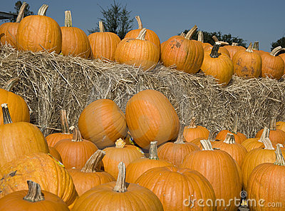 Pumpkins on hay