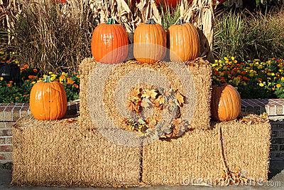 Pumpkins and hay bales