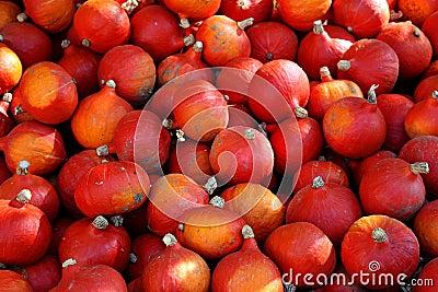 Pumpkins Hokkaido