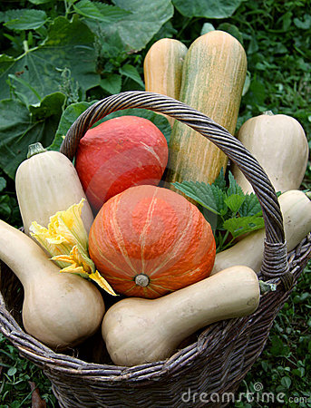 Free Pumpkins In The Basket Royalty Free Stock Photos - 15878878
