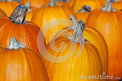 Pumpkins Lined up.