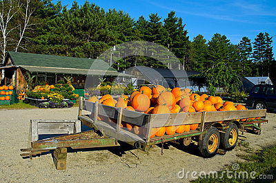 Pumpkins at the nursary