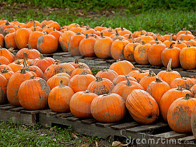 Pumpkins on pallets