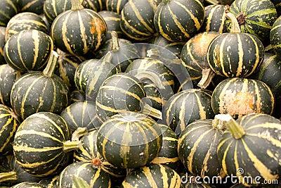 Pumpkins patch