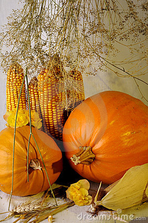 Pumpkins and plants isolated