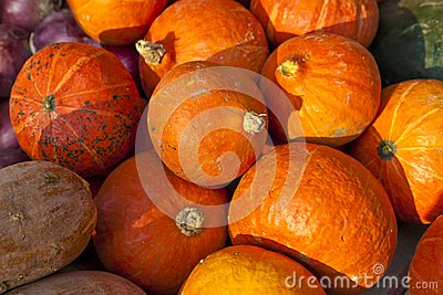 Pumpkins on sale
