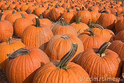 Pumpkins for sale 5