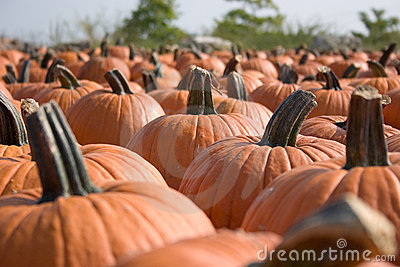 Pumpkins for sale  7
