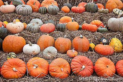 Pumpkins for sale at Dutch market