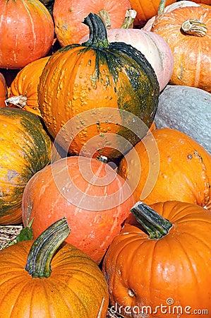 Pumpkins for sale by a street vendor