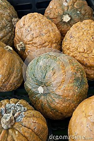 Pumpkins, squash