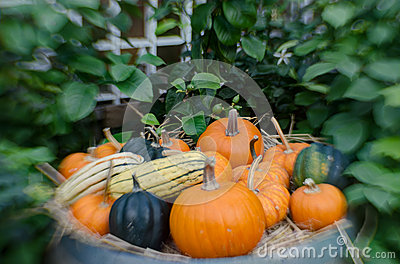 Pumpkins and squash in selective focus