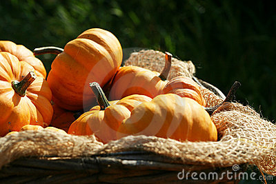 Pumpkins Still-life Stock Photography - Image: 6312332