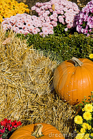 Pumpkins with Straw and Flowers
