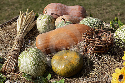 Pumpkins and wheat sheaf