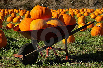 Pumpkins in a wheelbarrow
