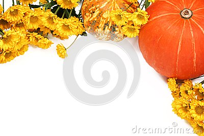 Pumpkins and yellow flowers on white background.