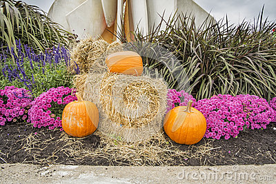 Pumpkisn  flowers and hay
