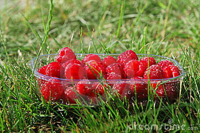 Punnet of raspberries