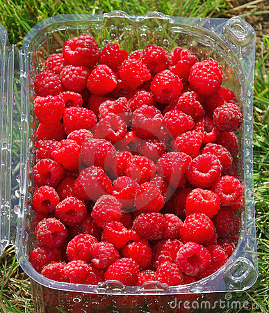 Punnet of raspberries