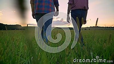 Punto di vista posteriore del giovane che cammina in avanti con il suo papà anziano sul giacimento della segale o del grano, bell stock footage