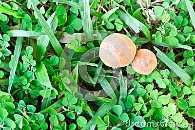 Punto di vista superiore del fungo