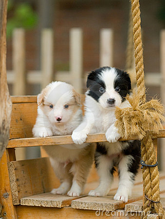 Free Puppies Royalty Free Stock Image - 4723016