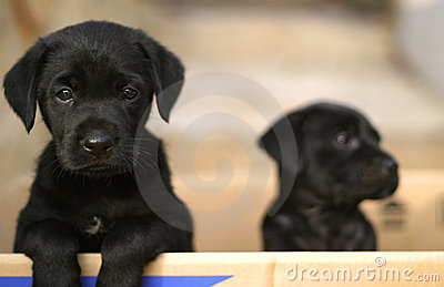 Puppies in a box