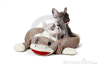 Puppies In A Dog Bed