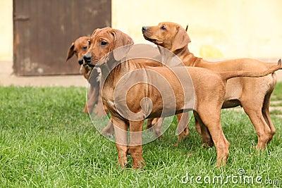 Puppies in the garden