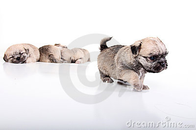 Puppies on the Move