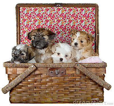 Puppies in a Picnic Basket